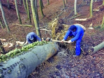 lemn taieri