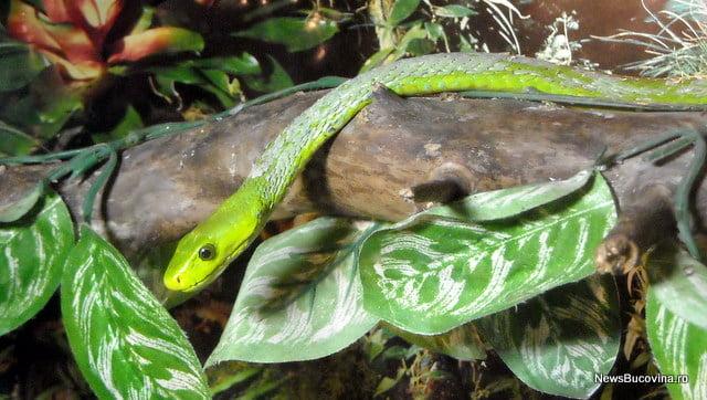 Reptile vii