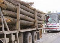 camion lemne transporturi