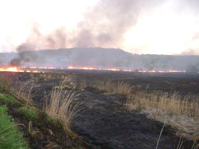 incendiu vegetatie stuf 2
