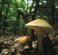 ciuperci padure