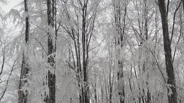 padure, copaci 2
