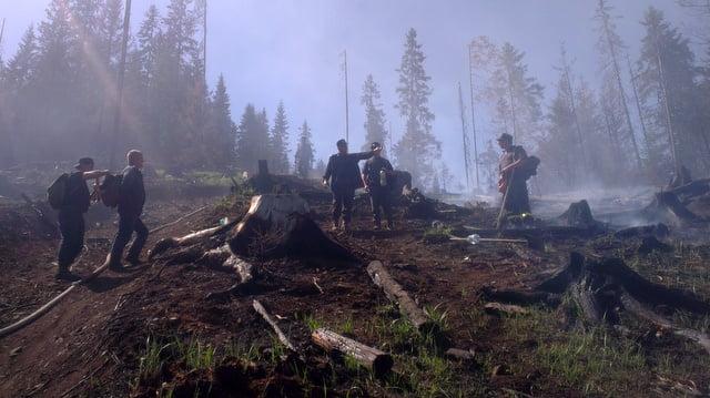 incendiu forestier 4