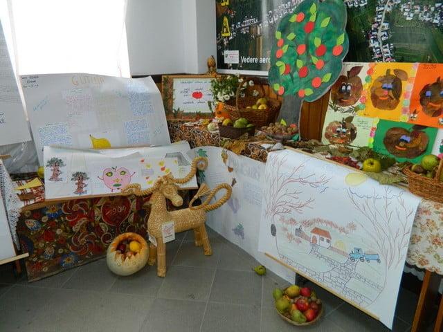 fructele izvor de sanatate liceu cajvana (1)