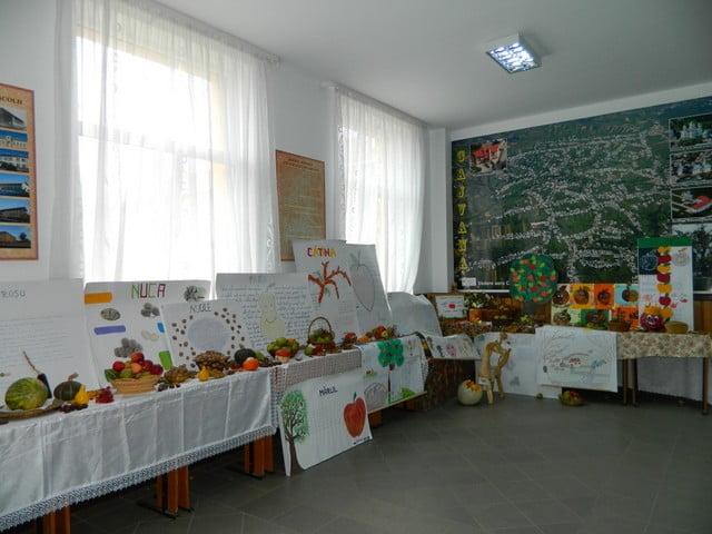 fructele izvor de sanatate liceu cajvana