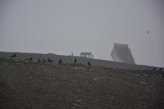 muncitori santier ciori groapa gunoi (7)
