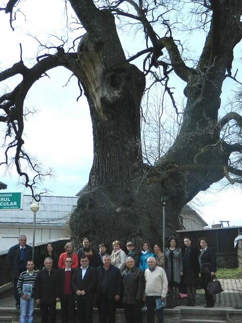 profesori la stejarul secular cajvana