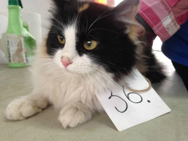 sterilizari caini si pisici (2)