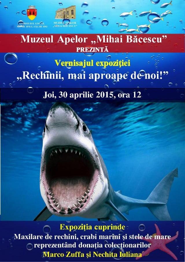 vernisaj rechini