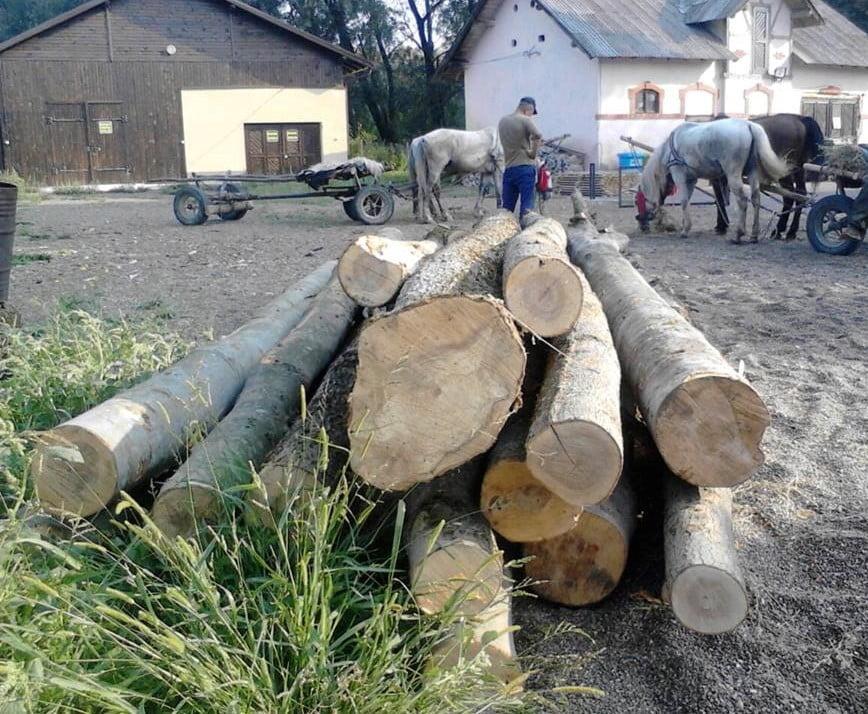 copaci taiati (1)
