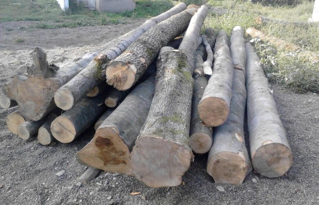 copaci taiati (2)