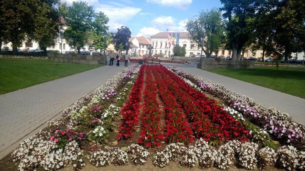 centru suceava flori (4)