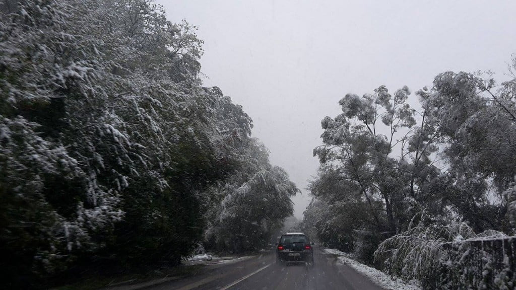 copaci, zapada, drum, ninsoare, iarna (1)