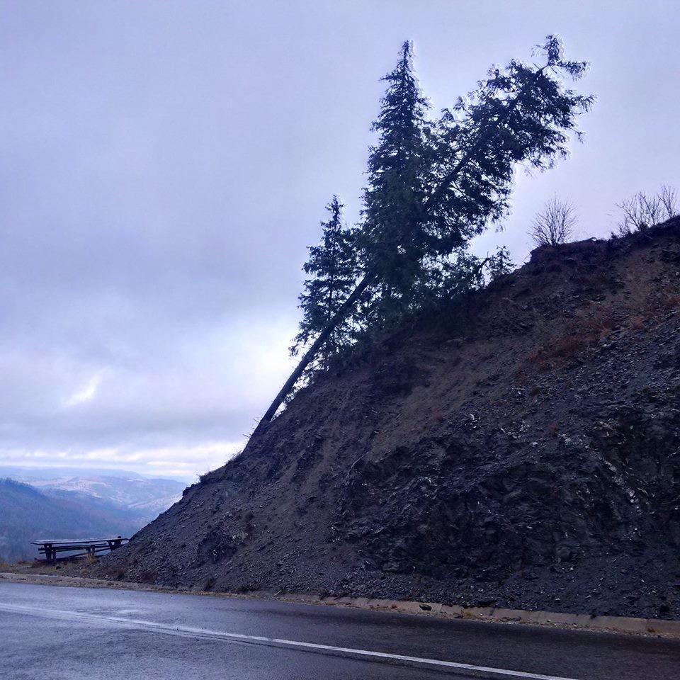 transrarau furtuna copaci drum (1)