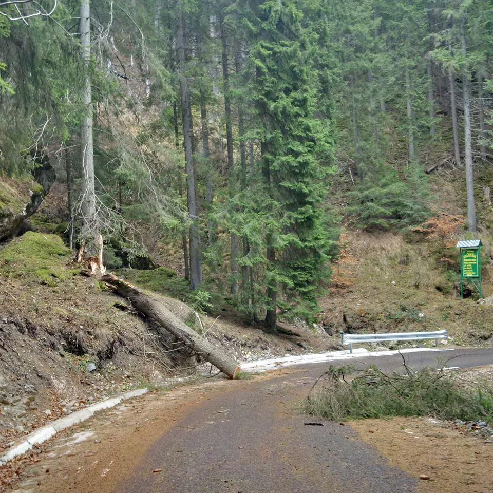 transrarau furtuna copaci drum (10)