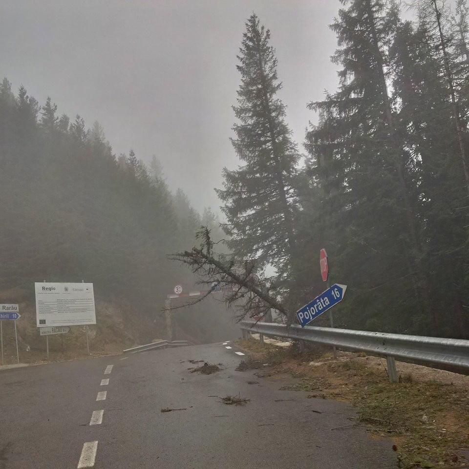transrarau furtuna copaci drum (2)