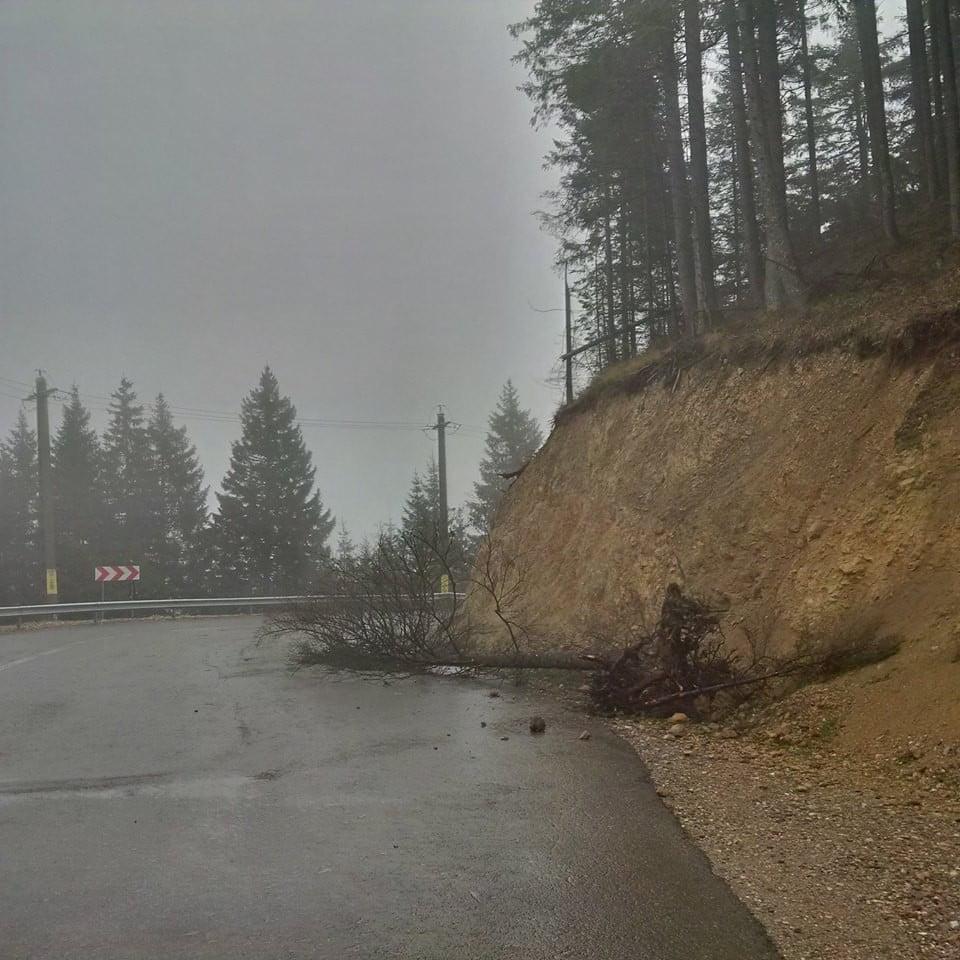 transrarau furtuna copaci drum (7)