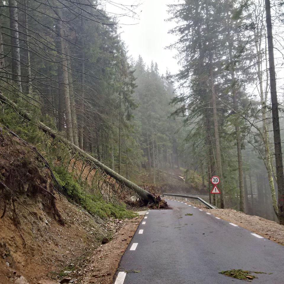transrarau furtuna copaci drum (8)