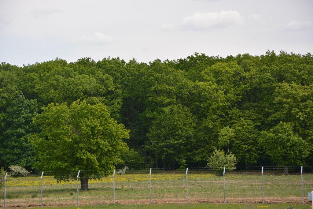 padure copaci (1)