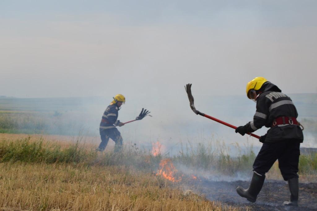incendiu vegetatie (11)