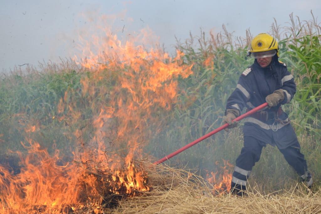incendiu vegetatie (7)