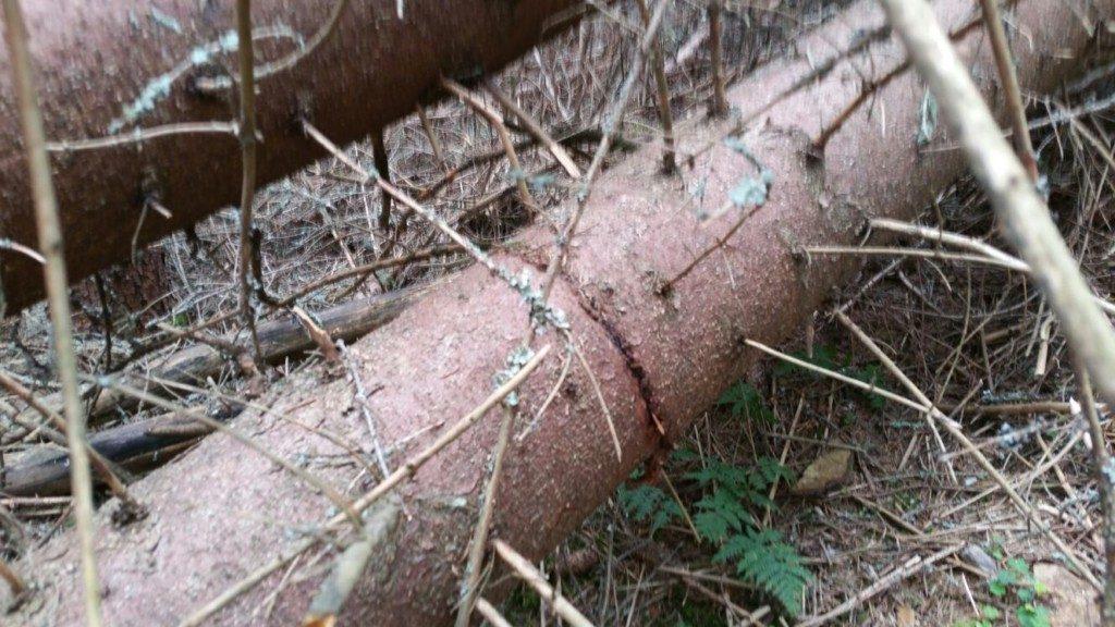 arbori doboratura (1)