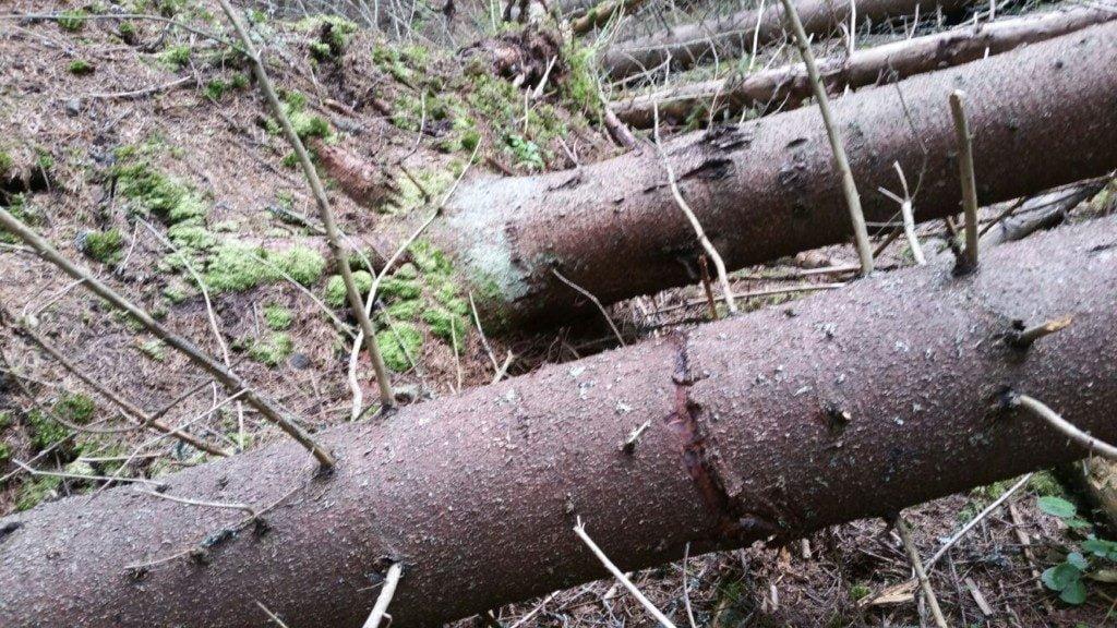 arbori doboratura (2)