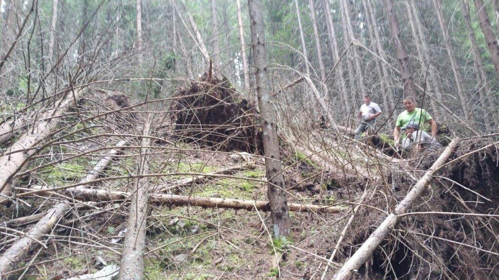 arbori doboratura (3)