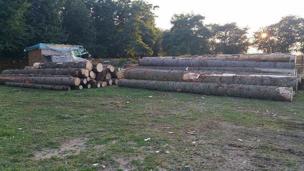 busteni lemn  (2)