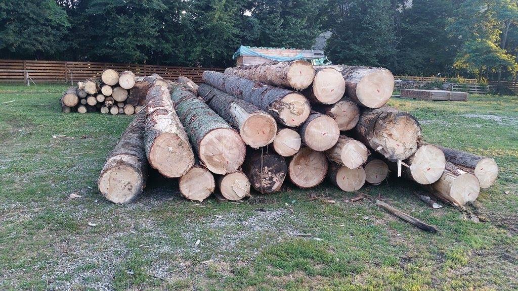 busteni lemn  (3)