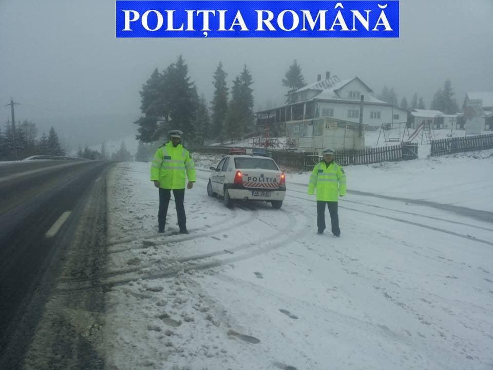 mestecanis-foto