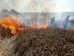 incendiu lan grau ratos (1) – Copy
