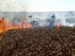 incendiu lan grau ratos (4)